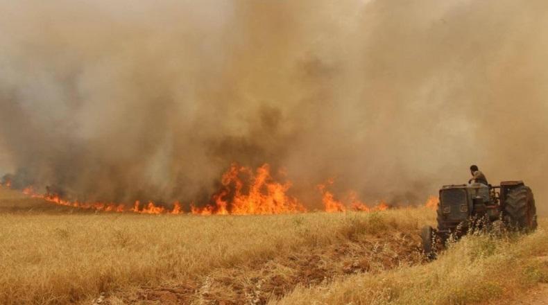 الكاف: احتراق 50 هكتارا من الحبوب بالزوارين