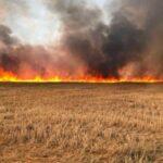اتحاد الفلاّحين يدعو لفتح تحقيق جدّي في الحرائق