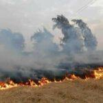 جندوبة: صاعقة تتسبّب في حريق بـ20 هكتارا
