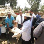عائلات ضحايا حادث السبالة : توزيع قطيع أغنام بقيمة 200 ألف دينار