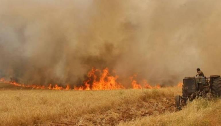 اتحاد الفلاّحين: خسائر الحرائق ناهزت 6 مليارات
