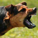 توصيات وزارة الصحة إثر تواصل تسجيل حالات داء الكلب