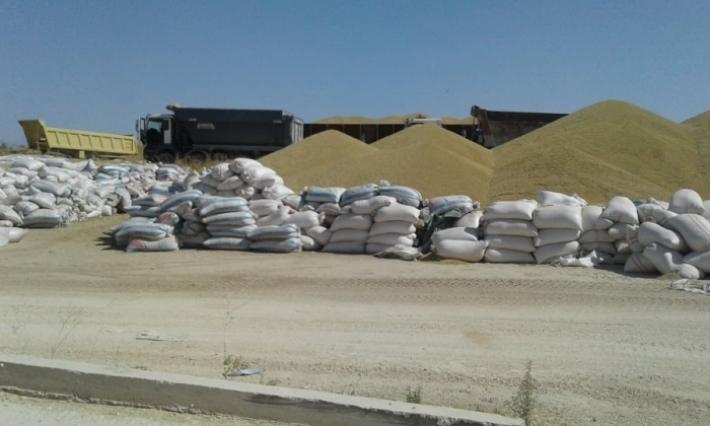 بالكاف وسليانة: الأمطار تُتلف كميات من الحبوب المُجمّعة في الهواء الطلق