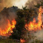 إخماد حرائق الأمازون: البرازيل ترفض مساعدة مجموعة الدّول السبع