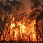 خبير في التغيرات المناخية: حرائقغابات الأمازون كارثة بيئية تُهدّد كلّ دول العالم