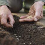 بنك الجينات : كميات البذور المحلية المُتوفّرة محدودة