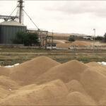 عبد المجيد الزار : كميات الحبوب المتلفة جراء الامطار مجهولة