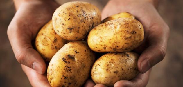 الاتحاد :توريد البطاطا من تركيا بـ1600 مليم ورفض شراءها من الفلاح بـ850 مليما