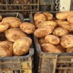 كانت ستُروّج بطريقة غير قانونية: حجز 250 طنّا من البطاطا بنابل