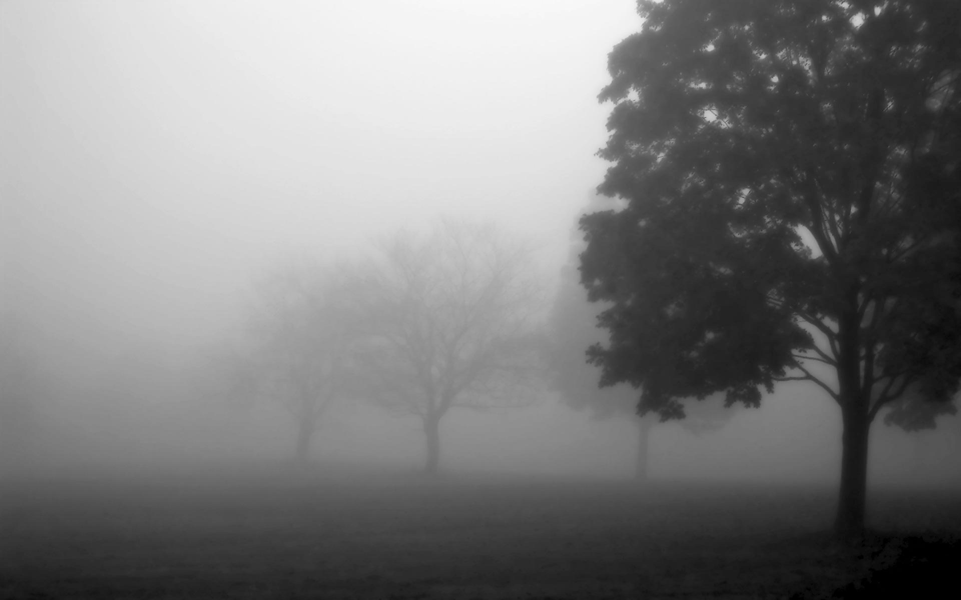 طقس اليوم: ضباب خفيف وسحب كثيفة
