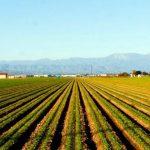 تونس: أكثر من 400 ألف هكتار من الأراضي الفلاحية غير مُستغلة وقسم مُهمّ منها ملك للدولة