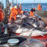 وزارة الفلاحة تعلن عن فتح باب الترشح لإسناد 5 رخص لصيد التن الأحمر