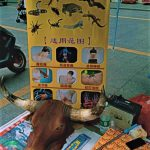 صحيفة بريطانية: إعادة فتح أسواق بيع لحوم الخفافيش والقطط والكلاب بالصين