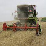 سليانة: انخفاض صابة القمح بـ65 % مقارنة بالموسم الفارط