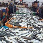 اتّحاد الفلاحة: نرفضُ توظيف معلوم على انزال مُنتجات الصيد البحري للتصدير
