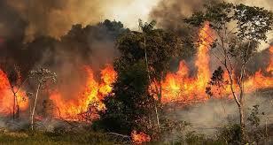 سجنان: حريق هائل يأتي على 5 هكتارات بالغابات