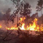 مدير الحماية المدنية بنابل: السيطرة على حريق غابات جبل قربص