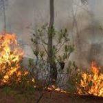 مُدير الحماية المدنية ببنزرت: السيطرة على حريق غابة دوار منارة