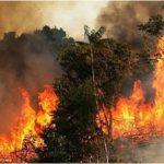 بنزرت: حريق هائل يأتي على 10 هكتارات
