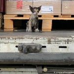 قصة قطّة تونسية قطعت المتوسط داخل حاوية وحطّت بألمانيا