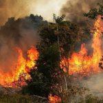 ببنزرت: السيطرة نهائيا على حريق جبل الناظور والحرس يفتح تحقيقا