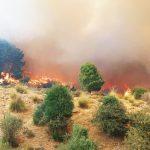 زغوان: حريق بغابة يأتي على 5 هكتارات