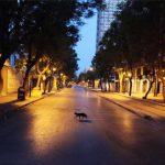 فرض حظر الجولان باقليم تونس الكبرى