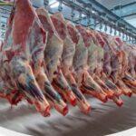 نقابة تجار اللحوم الحمراء تدعو للترخيص في التوريد لمجابهة غلاء الاسعار