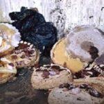 وزارة الصحة: ضبط 1360 مخالفة بمحلات لصنع وبيع المرطبات ولحوم الدواجن