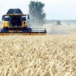المرصد الوطني للفلاحة: ارتفاع وتيرة توريد الحبوب بـ 20 بالمائة في 4 اشهر !