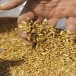 الغنيمي: شحنة القمح بميناء سوسة مطابقة للمواصفات والتفتيش جار عن صاحب الفيديو