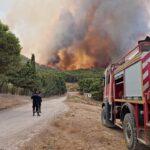الكاف: حرائق غابية ضخمة تلتهم 10 منازل وتتسبّب في نفوق عدد من رؤوس الماشية