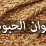ديوان الحبوب: لأول مرة  ..عدم إتلاف كميات من الحبوب خلال التجميع رغم ارتفاع المحصول