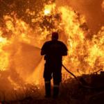 يُنهكها التخريب والحرائق: مردود مليون هكتار من الغابات لا يتجاوز 15 مليون دينار سنويا