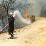 إدارة الغابات: ايقافات بشبهة افتعال الحرائق الاخيرة